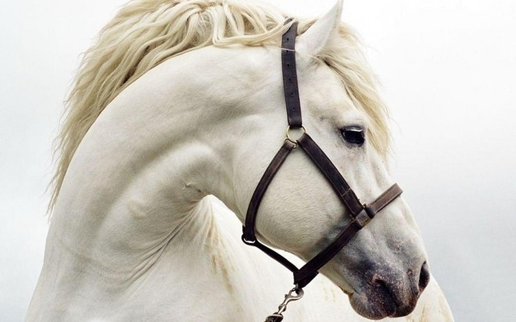 Most Beautiful Horse Wallpaper and Backgrounds Free Download