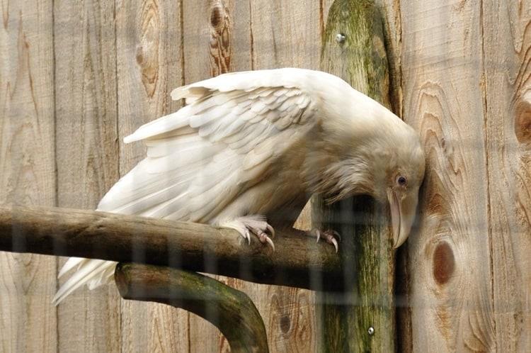 white animals (29)