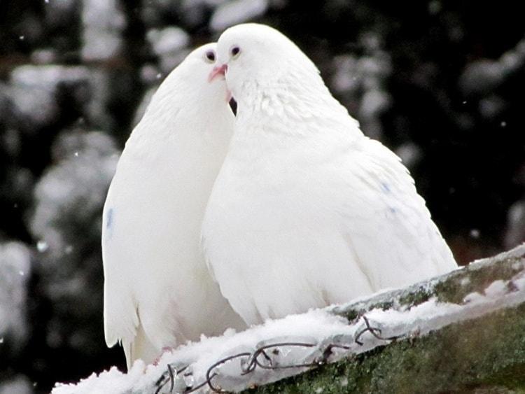white animals (32)