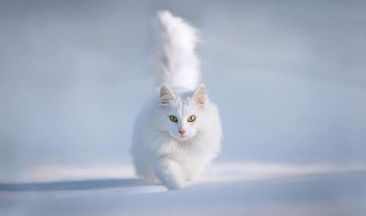 white animals (33)