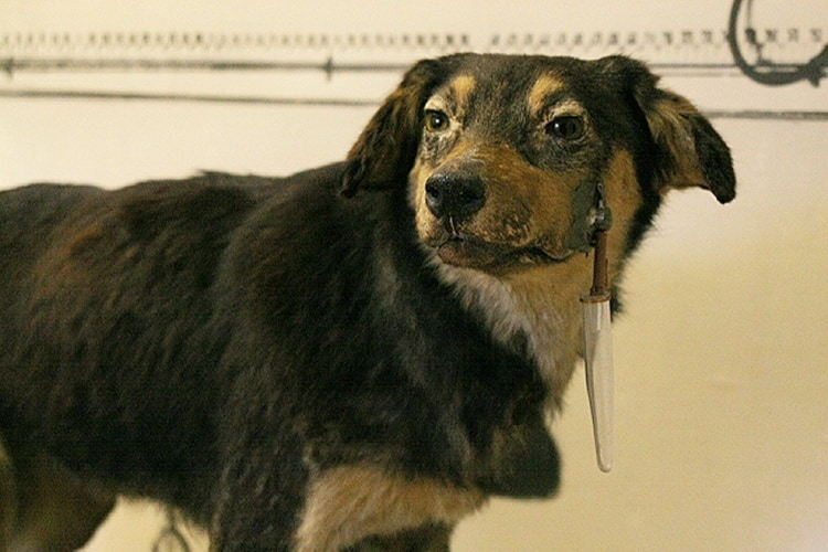 6 pavlov's dog