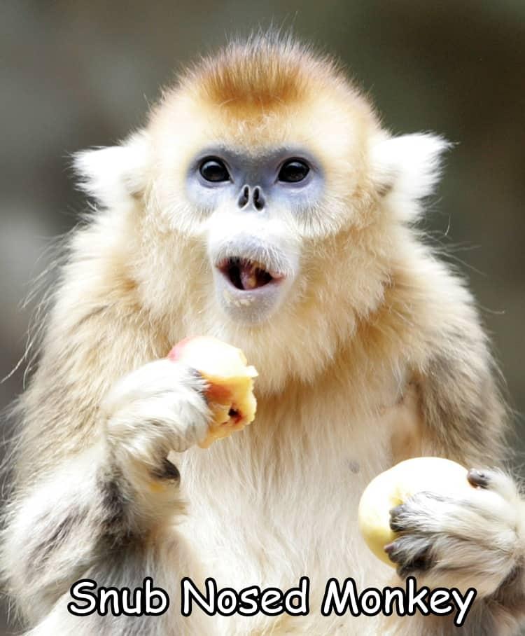 South Korea Monkey