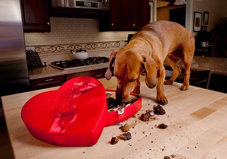 dogs bad habbits (11)