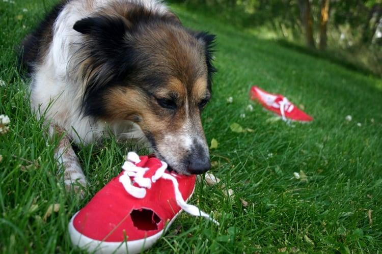 dogs bad habbits