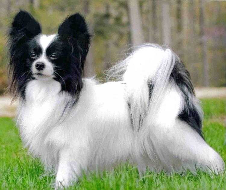 smart dogs (2)