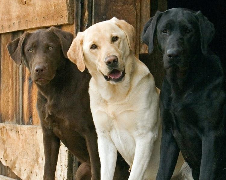 smart dogs (3)