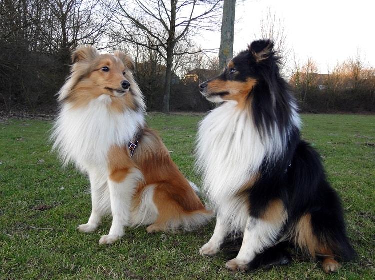 smart dogs (4)