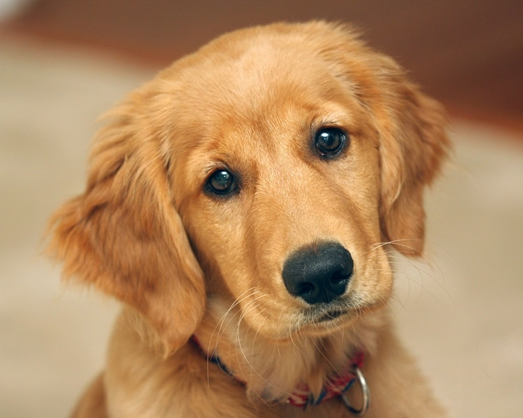 smart dogs (6)
