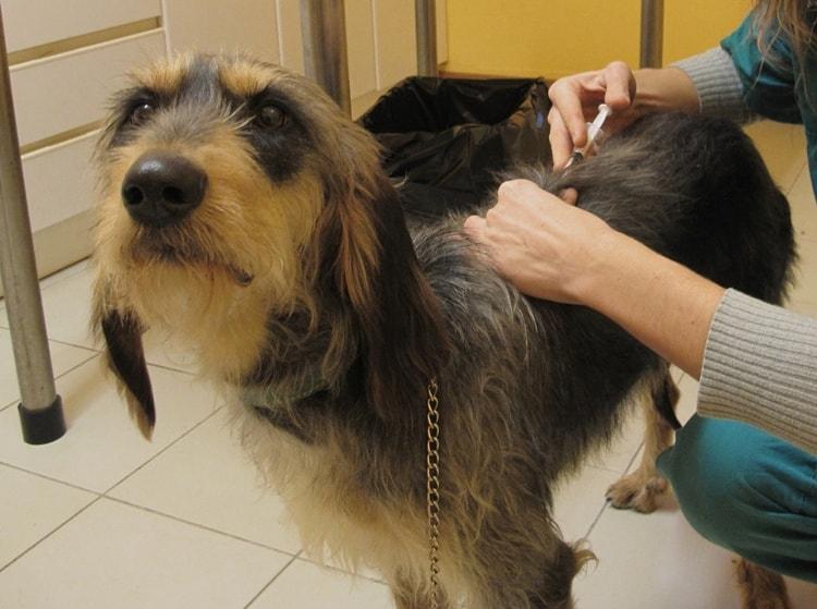 vaccination dog parvovirus zoorium