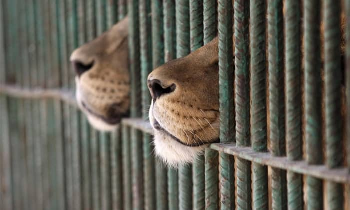 the benefits of keeping animals in zoos