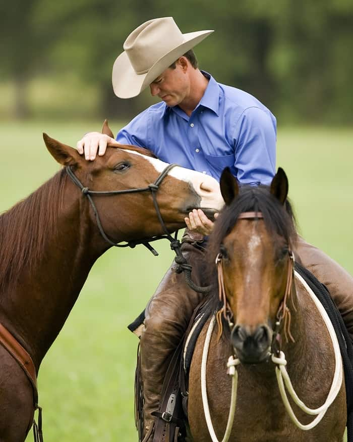 horsefeedblog.com