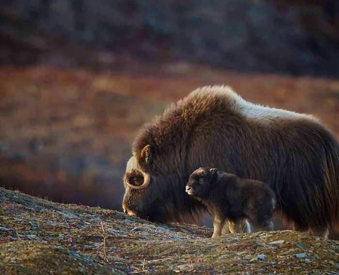 animals-photos-2012-29
