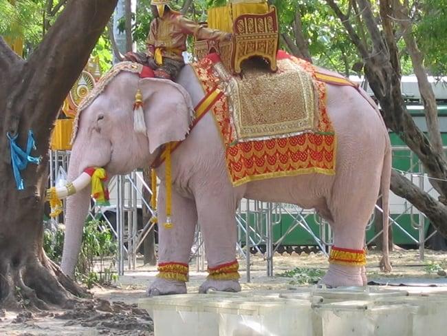 Download Gambar Hewan Gajah Putih