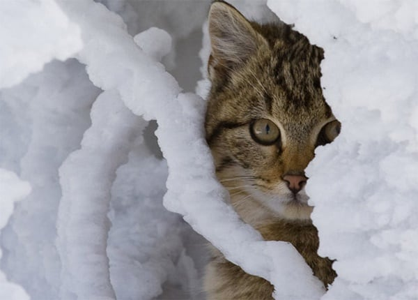 animals-in-snow-1