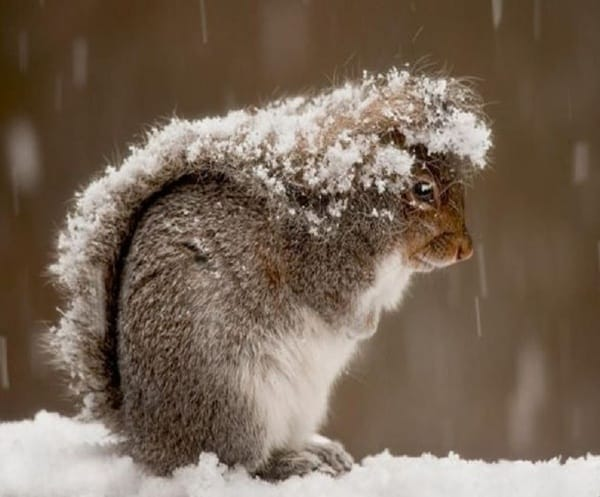 Animals in snow (14)