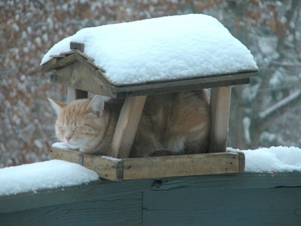 Animals in snow (21)