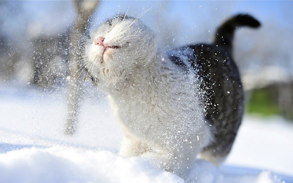 Animals in snow (29)