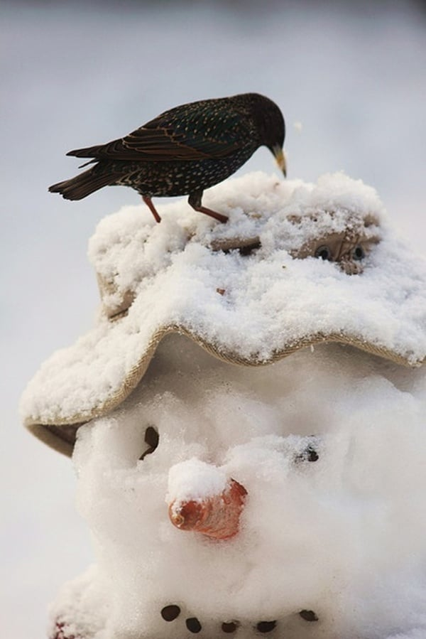 Animals in snow (44)