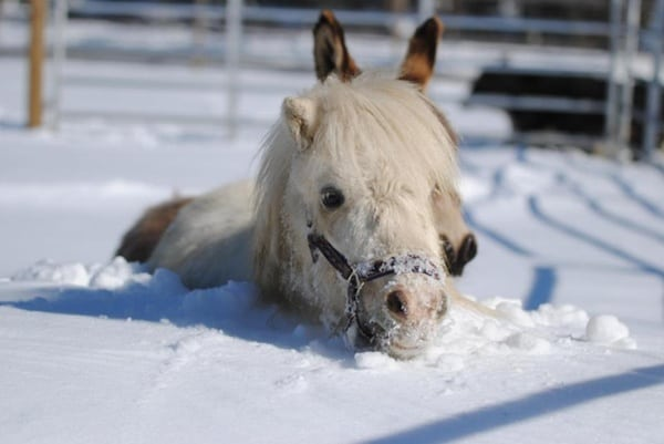 Animals in snow (7)