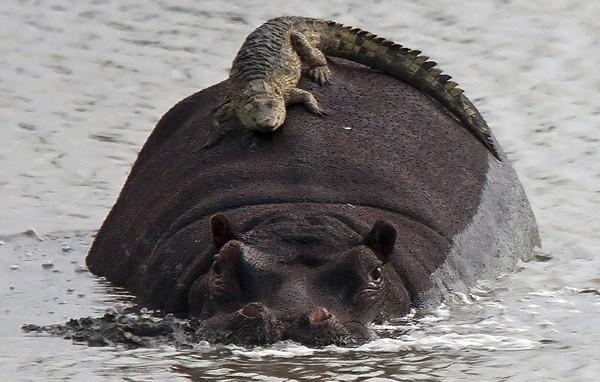 Animals riding animals (11)