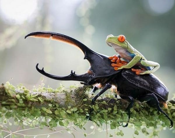 Animals riding animals (13)