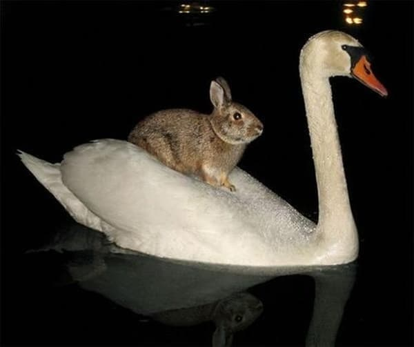 Animals riding animals (22)