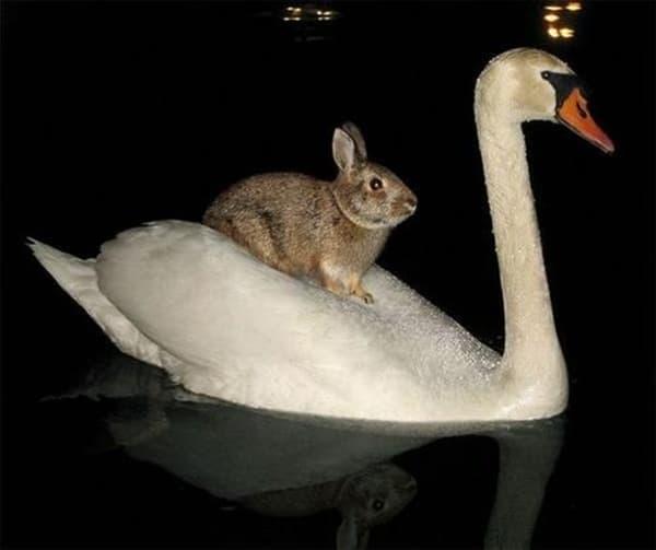 Animals riding animals (22)
