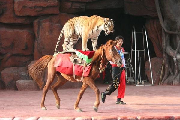 Animals riding animals (23)