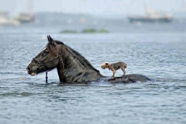 Animals riding animals (5)