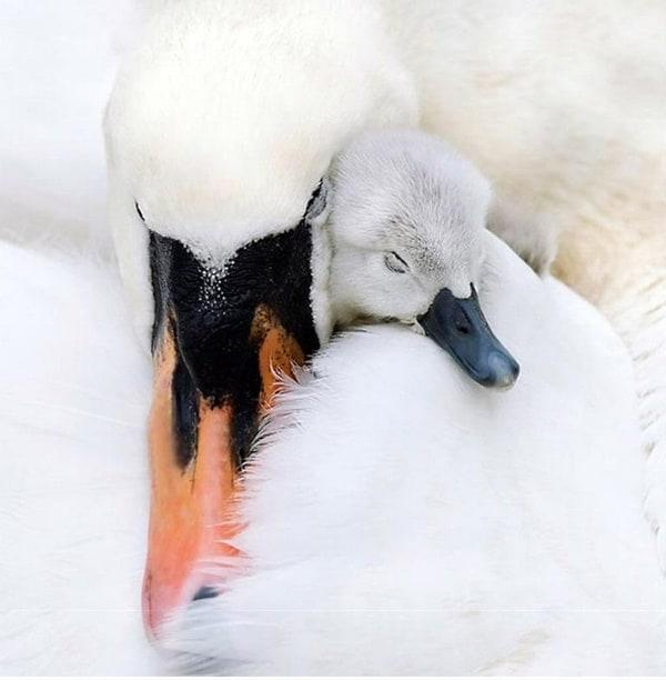 Cute Duck (5)