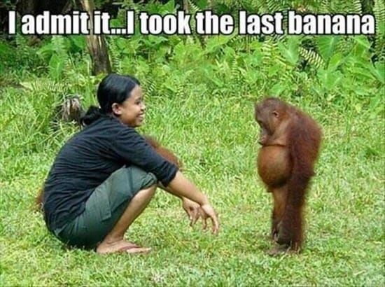 Funny pictures of animals (11)