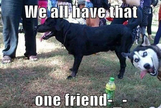 Funny pictures of animals (18)