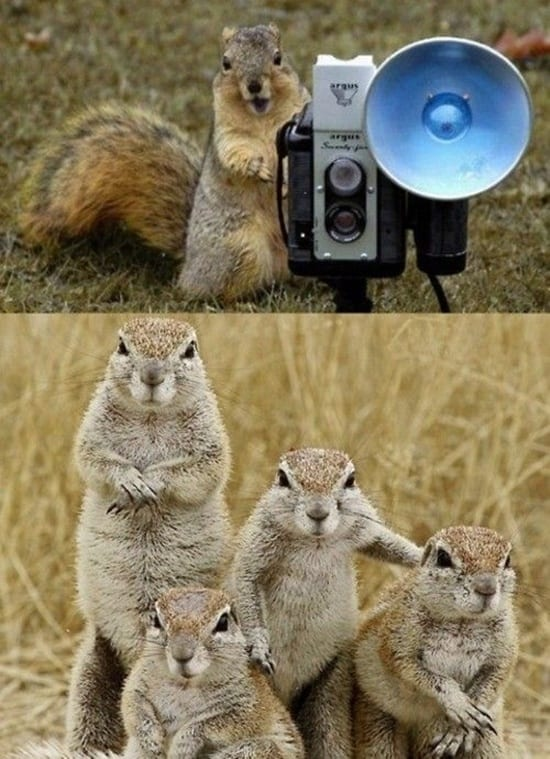 Funny pictures of animals (20)