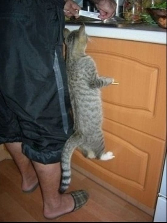 Funny pictures of animals (4)