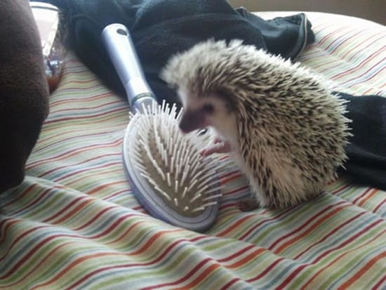 Funny pictures of animals (42)