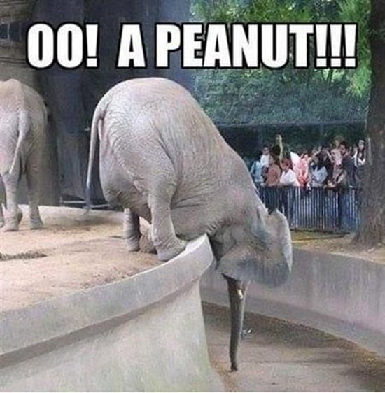 Funny pictures of animals (7)