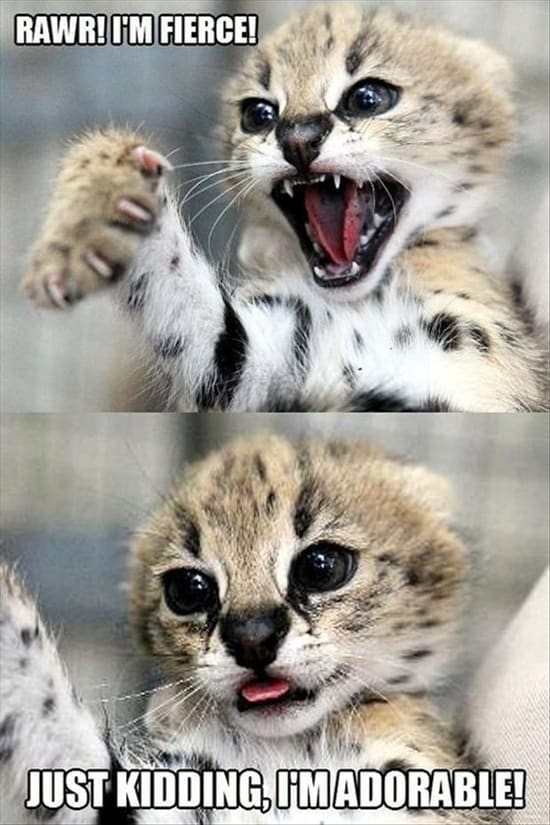 Funny-pictures-of-animals.jpg