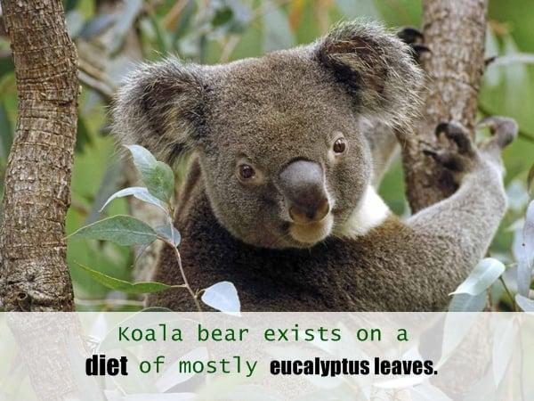 animals  random facts (10)