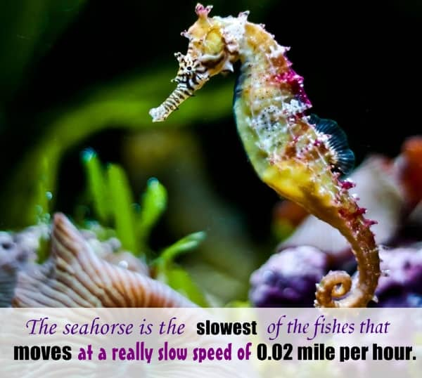 animals  random facts (22)