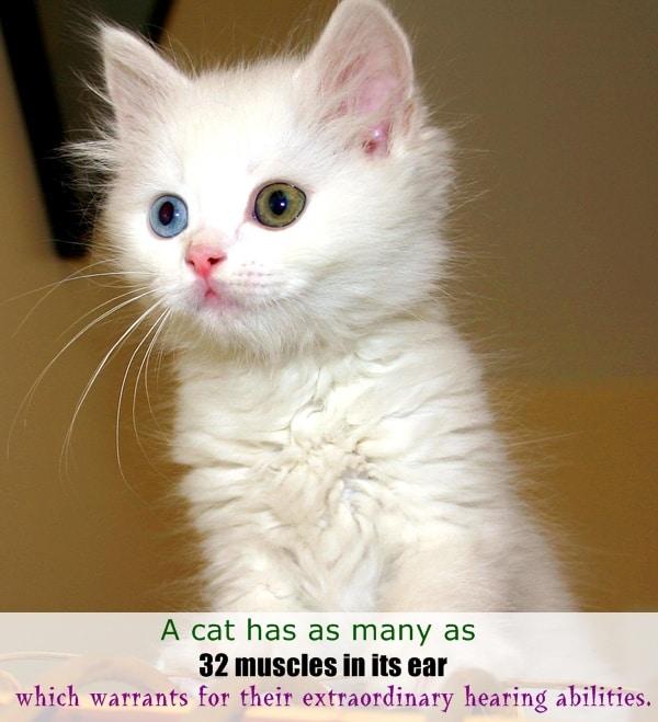 animals  random facts (9)