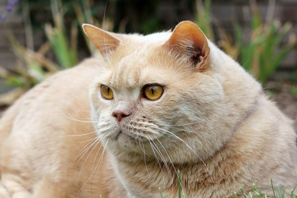 cats breeds (1)