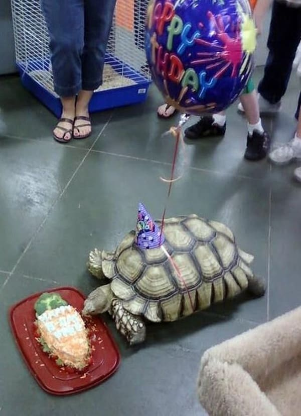 celebrating animals birthday