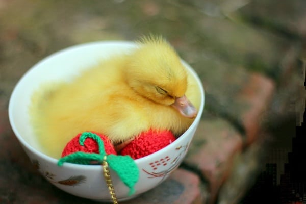 cute duck pictures (32)