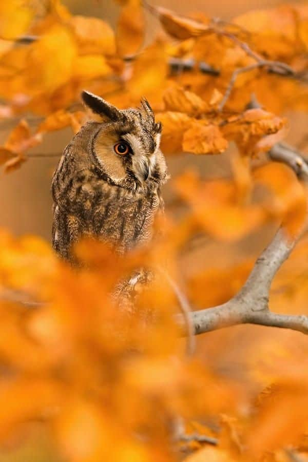 owl pictures (1)