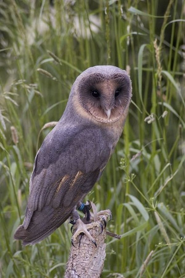 owl pictures (16)