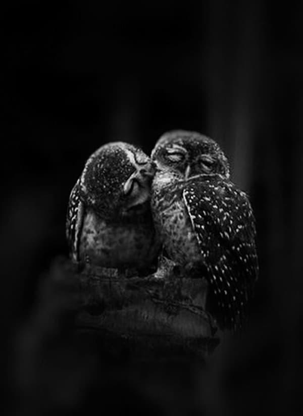 owl pictures (32)