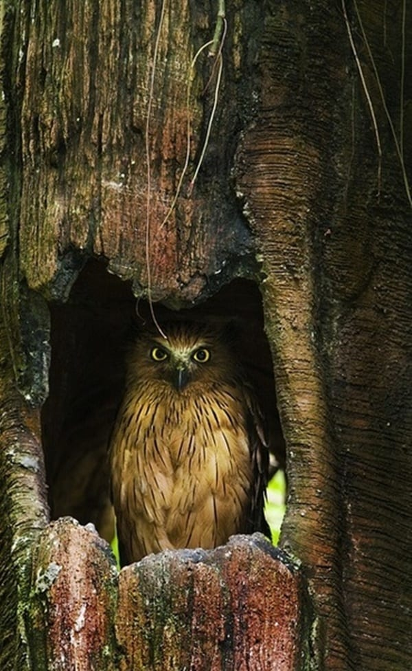 owl pictures (38)