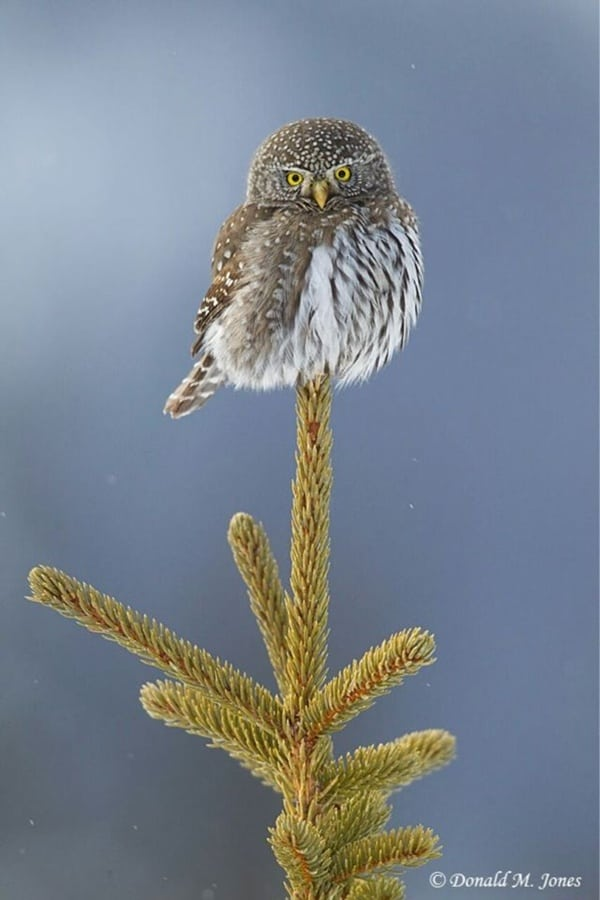 owl pictures (4)