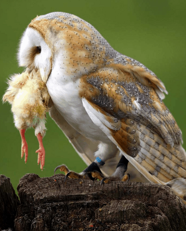 60 cute owl pictures some interesting pictures for you to enjoy