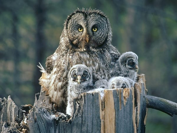 owl pictures (46)